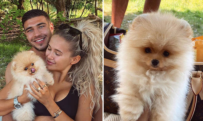 Love Island's Molly-Mae and boyfriend Tommy Fury revealed that their puppy Mr Chai had passed away this week.
