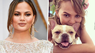 Chrissy Teigen reveals French Bulldog Pippa died in her arms after 'depressed' & 'lost' statement
