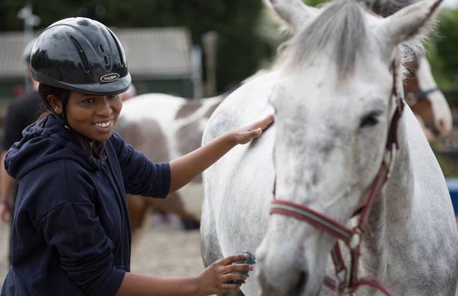 Learning Through Horses.
